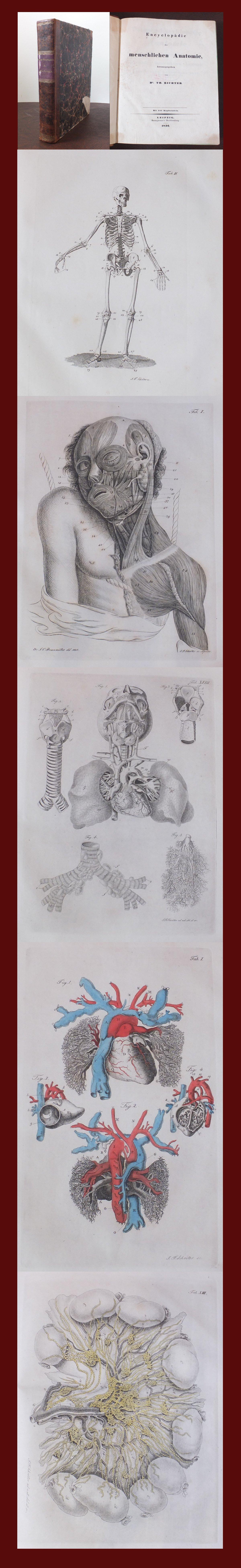 Beste Atlas Der Menschlichen Anatomie 4. Auflage Fotos - Physiologie ...